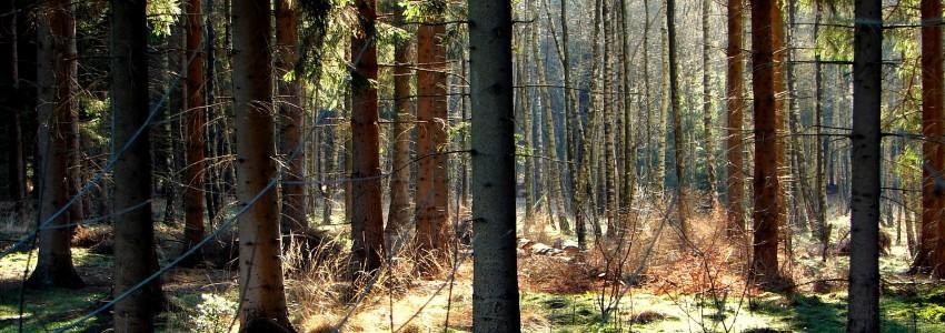 Bos-, natuur- en boomverzorging